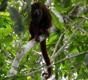 MAnu tours monkey picture